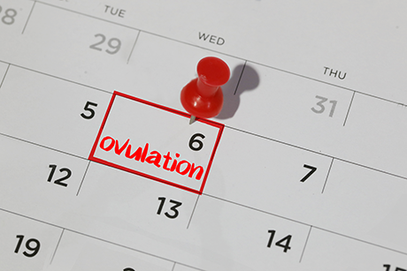 Ovulation Calculator | Find Out When You're Most Fertile